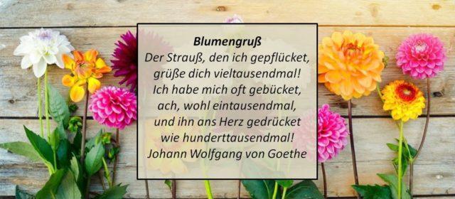 Damen Floral Blumen Art Lavender Rosa Weiß Schwarz Grün Blau